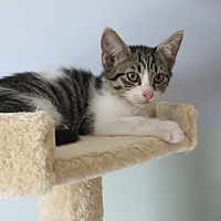 Adopt A Pet :: Maxxy - Lexington, KY