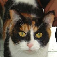 Adopt A Pet :: Rocci - Queen Charlotte, BC