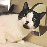 Adopt A Pet :: LOUIE - Hampton Bays, NY