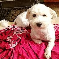 Adopt A Pet :: Tao - Detroit, MI