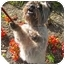 Photo 2 - Cairn Terrier Dog for adoption in Portland, Oregon - Lucky Dog!