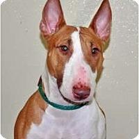 Adopt A Pet :: Missy - Port Washington, NY