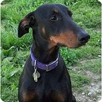 Adopt A Pet :: Adele--adopted!! - New Richmond, OH