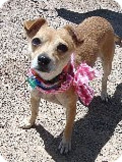 Chihuahua Mix Dog for adoption in Las Vegas, Nevada - Ruby