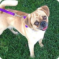 Adopt A Pet :: Buster - Burbank, CA