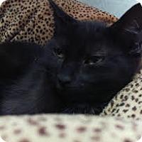 Adopt A Pet :: Zac Hanson - Richboro, PA