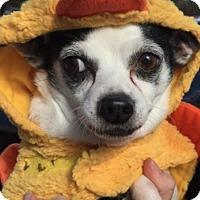 Adopt A Pet :: Sprinkles - Pompton Lakes, NJ