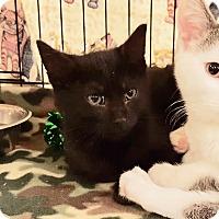 Adopt A Pet :: Raven - Colmar, PA