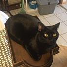 Adopt A Pet :: Leo - West Palm Beach, FL