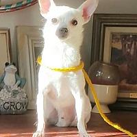 Adopt A Pet :: dude - Yucaipa, CA