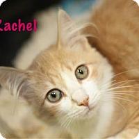 Adopt A Pet :: Rachel - Baton Rouge, LA