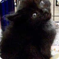 Adopt A Pet :: Panther - Castro Valley, CA