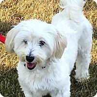 Adopt A Pet :: Jaxx - ADOPTED - Livonia, MI