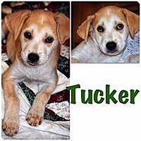 Adopt A Pet :: Tucker - Smithtown, NY