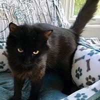 Adopt A Pet :: Tweetie - West Columbia, SC