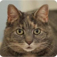 Adopt A Pet :: Pokey 22115-c - Ithaca, NY