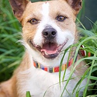 Adopt A Pet :: Kevin - Van Nuys, CA