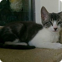 Adopt A Pet :: CALEY - Houston, TX