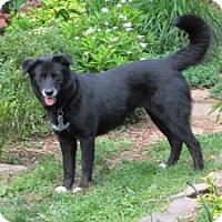 Adopt A Pet :: Angie - Chalfont, PA