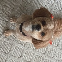 Adopt A Pet :: Harley - Cambridge, ON