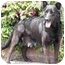 Photo 3 - German Shepherd Dog/Labrador Retriever Mix Dog for adoption in El Segundo, California - Ellie