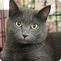 Adopt A Pet :: Phoebe - Frederick, MD