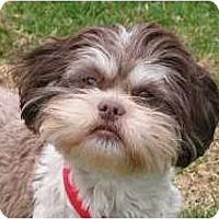 Adopt A Pet :: Lili - Rigaud, QC