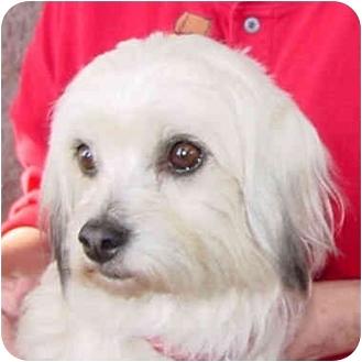 Lhasa Apso Mix Dog for adoption in Spring Valley, California - FIJI