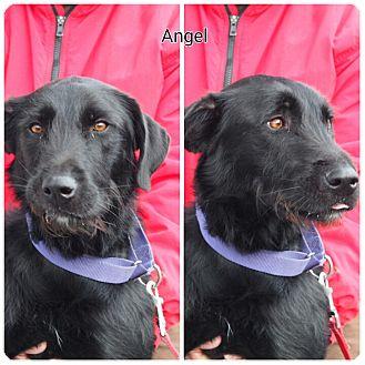 Terrier (Unknown Type, Medium) Mix Dog for adoption in Breinigsville, Pennsylvania - Angel