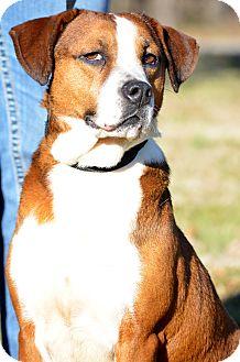 Basset Hound/Beagle Mix Dog for adoption in Washington, Georgia - Axley