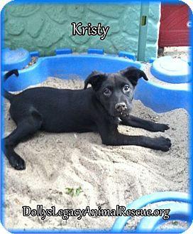 Labrador Retriever/Shepherd (Unknown Type) Mix Puppy for adoption in Lincoln, Nebraska - KRISTY