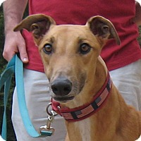 Adopt A Pet :: Dusty - Oak Ridge, NC
