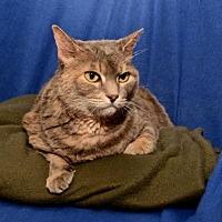 Adopt A Pet :: Bella - Sanford, FL