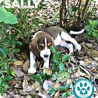 Adopt A Pet :: Sally - Kimberton, PA
