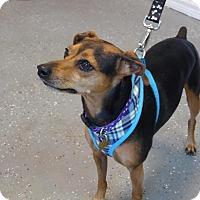 Adopt A Pet :: Rocky - Englewood, FL