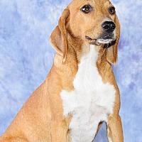 Adopt A Pet :: Delta - Cary, NC