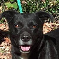 Adopt A Pet :: AA-Braxton - Tyler, TX