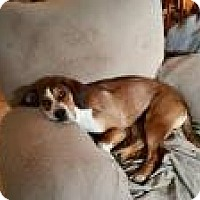 Adopt A Pet :: Hannah - Okmulgee, OK