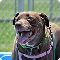 Adopt A Pet :: Scarlett  32000831 - Westampton, NJ