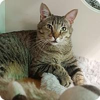 Adopt A Pet :: Wiggy - Gilbert, AZ