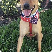 Adopt A Pet :: JEDI - Fort Pierce, FL