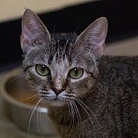 Adopt A Pet :: Billie Jean - Fargo, ND