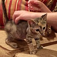 Adopt A Pet :: Diamond - Tomball, TX