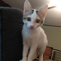 Adopt A Pet :: Kremey - Huntsville, AL
