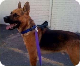 German Shepherd Dog Mix Dog for adoption in Los Angeles, California - Bandit - NEEDS FOSTER!