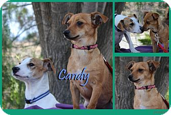 Chihuahua Mix Dog for adoption in Pittsburgh, Pennsylvania - Candy