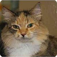 Adopt A Pet :: Roswell - Woodstock, GA