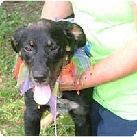 Adopt A Pet :: Summer - Glastonbury, CT