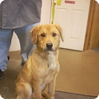 Adopt A Pet :: # 2 STRAY Avail. 12/3 - Carrollton, OH