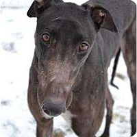 Adopt A Pet :: Nelson (Magnetic Vortex) - Chagrin Falls, OH